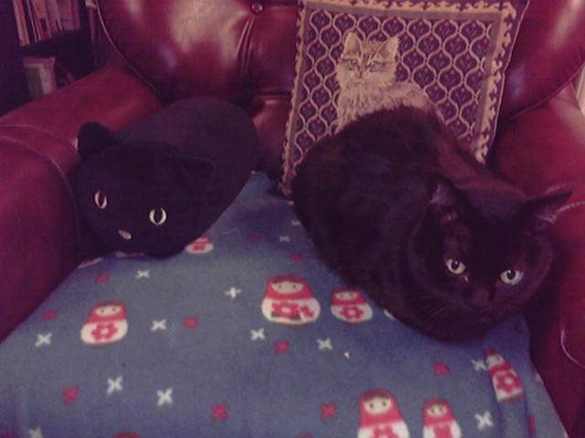 黒ネコのクッション