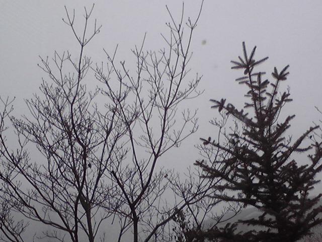 真冬の濃霧