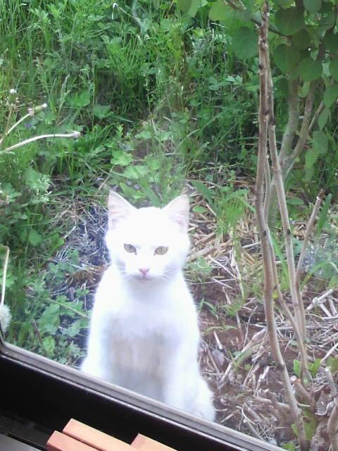 白猫が来た!