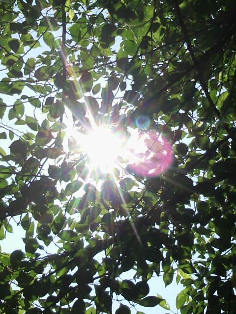 太陽キラキラ