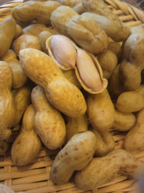 ピーナッツ収穫