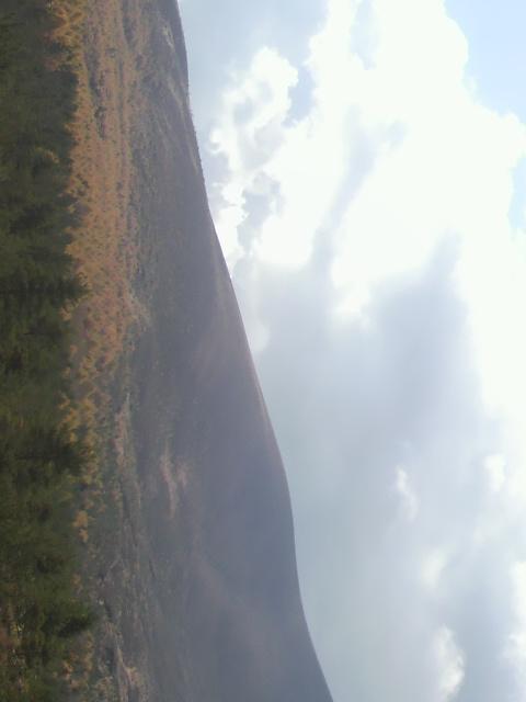 浅間山のカラマツ林