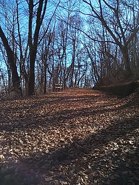 軽井沢で森散歩