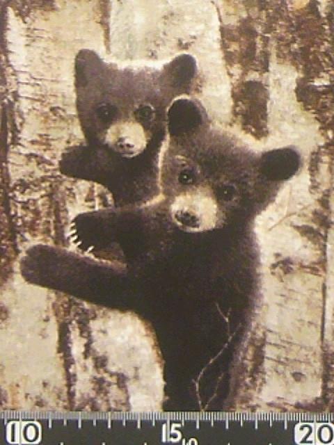 子熊柄の布地